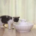 Fontána je vhodná pro dospělé kočky i koťata