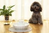 Fontána i pro malé psy