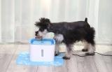 Fontána je vhodná i pro malé psy